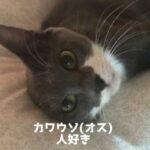 カワウソ(オス)