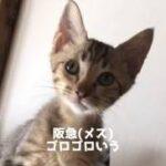 阪急(メス)